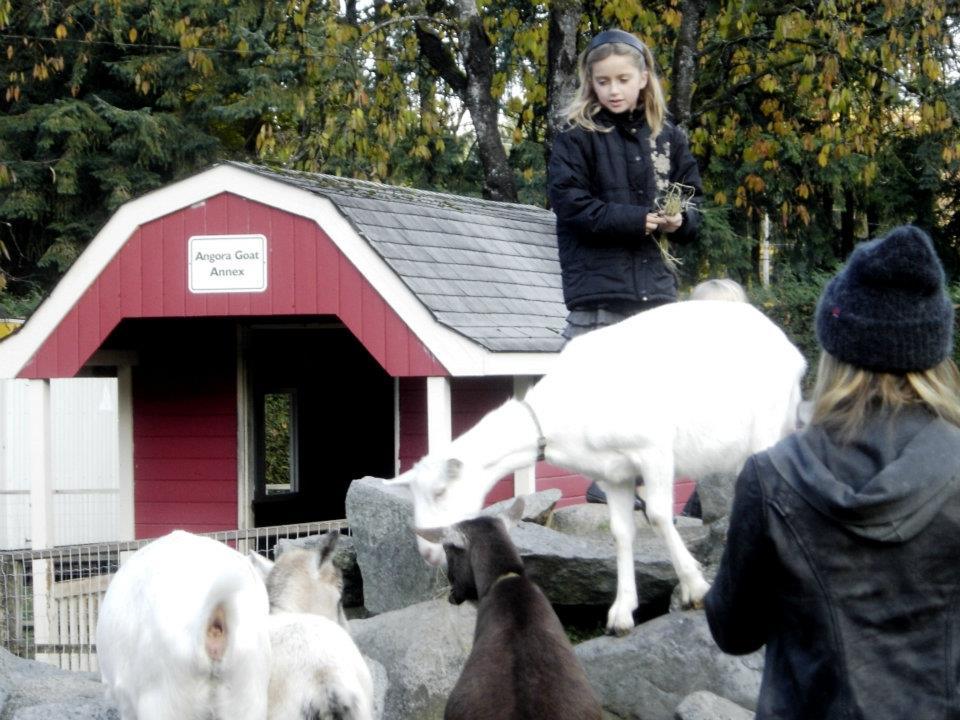Maplewood Farm Goats