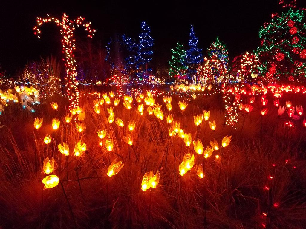Vandusen Bright Lights Garden