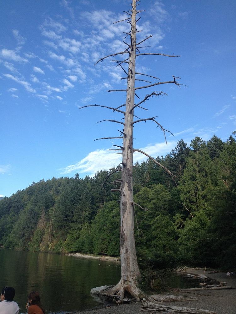 vancouver water adventures bowen island tree