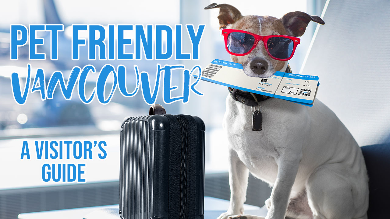 Pet Friendly Vancouver: A Visitor's Guide