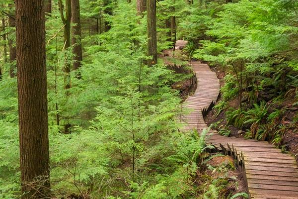 Lynn Canyon Trail Vancouver