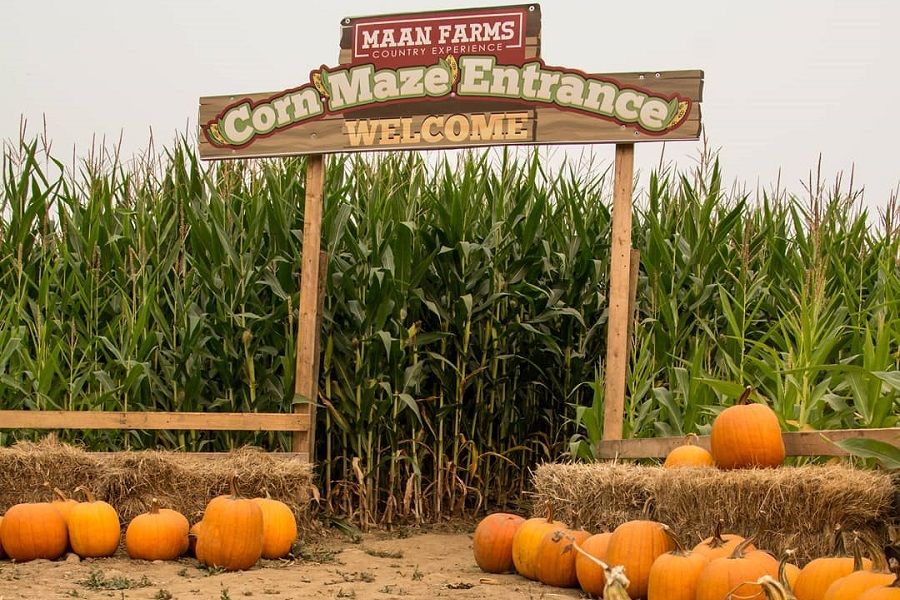 Maan Farms Corn Maze Abbotsford