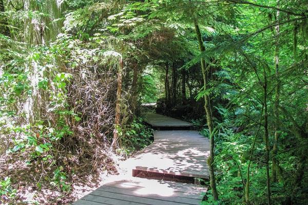 Pacific Spirit Regional Park Trail Vancouver