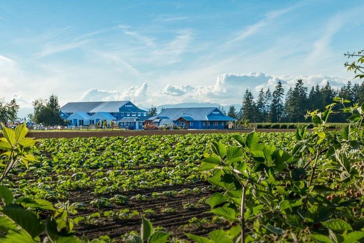 Krause Berry Farms Langley
