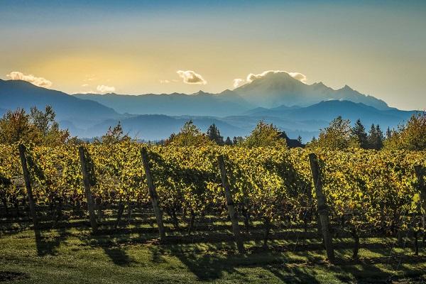 Mt Lehman Winery Abbotsford