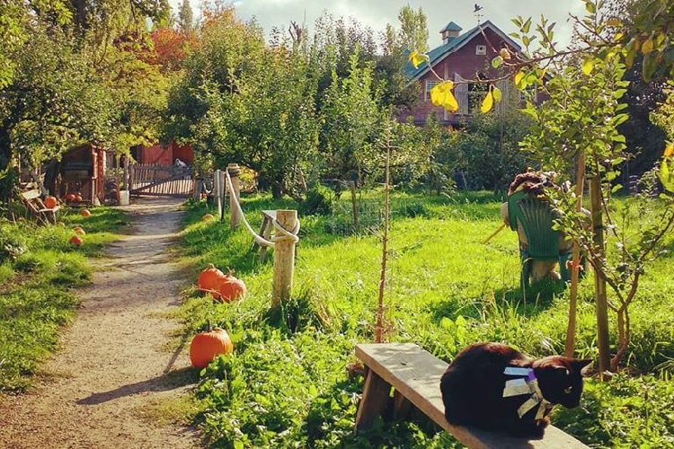 Southland Heritage Farm Vancouver