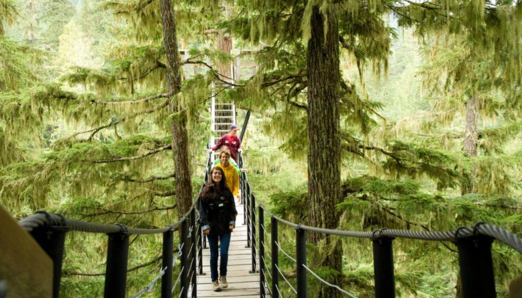 Ziptrek Treetrek Tour Whistler